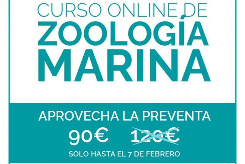 Curso Online De Zoologia Marina Cursos De Buceo Buceo Conciencia