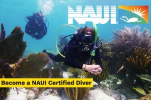 CURSO OPEN WATER NAUI - EN VITORIA